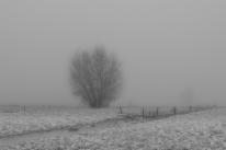 Drongen_landscape-1.jpg