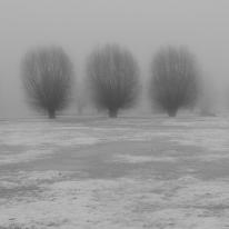 Drongen_landscape-2.jpg