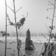 Drongen_landscape-3.jpg
