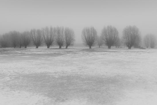 Drongen_landscape-5.jpg