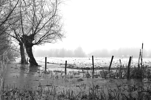 Drongen_Winter-3