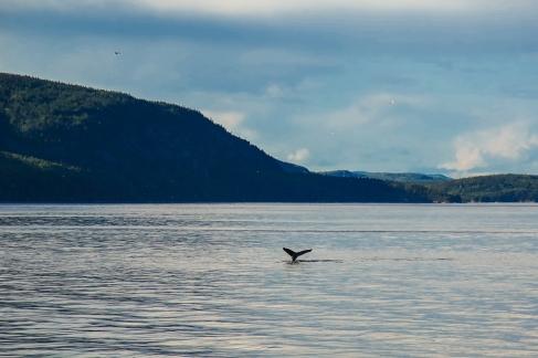 Oost canada wildlife-11