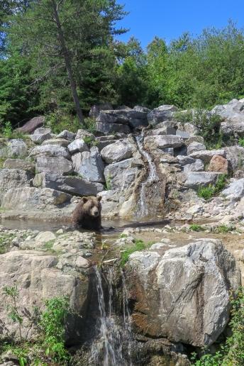 Oost canada wildlife-12