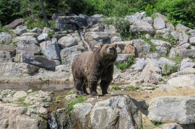 Oost canada wildlife-13
