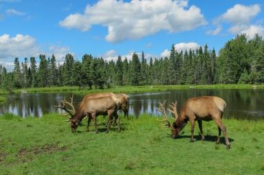 Oost canada wildlife-14