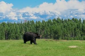 Oost canada wildlife-17