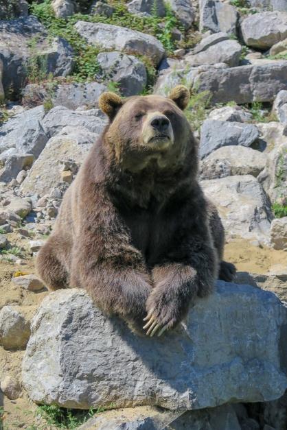 Oost canada wildlife-18
