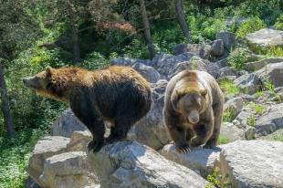 Oost canada wildlife-19