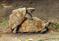 schildpad_001