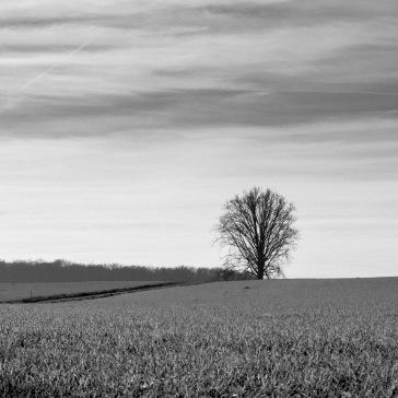 Landschap Vlaamse Ardennen