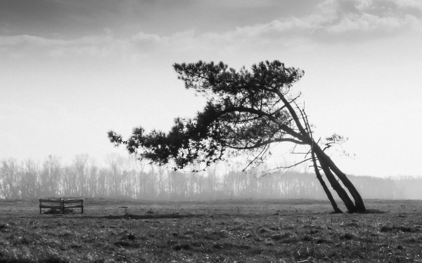 Landschap, minimalistisch
