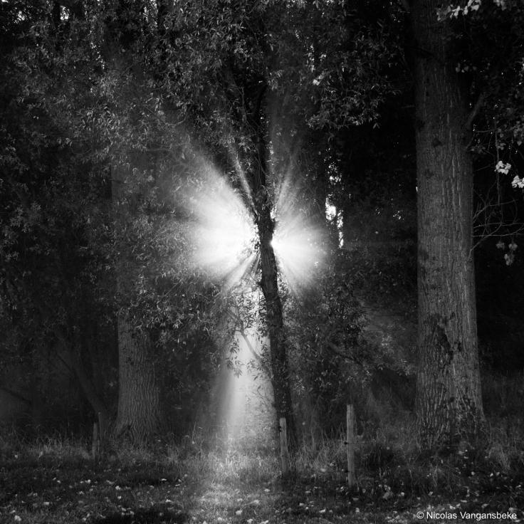 Silhouetten van het licht