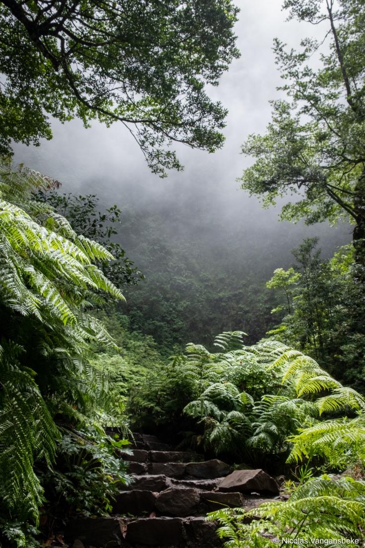 Madeira, een berg vol natuurpracht in de oceaan